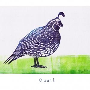 """""""Q like Quail"""""""