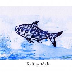 """X like X-Ray Fish"""