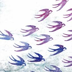 schwalben klein