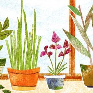 My Garden of Herbs